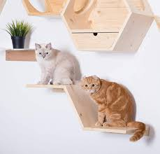 wall mounted cat shelves and perches