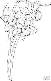 Coloriage Narcisses Du Printemps Coloriages Imprimer Gratuits