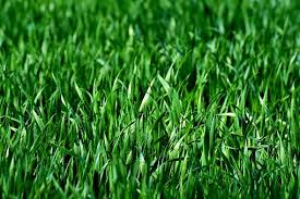 Green Grass Images Pixabay Download Free Pictures