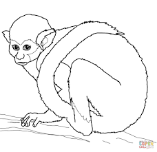 Small Picture Squirrel Monkey coloring page Free Printable Coloring Pages