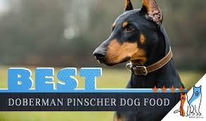 Simply Nourish Large Breed Puppy Food Feeding Chart 6 Best Doberman Pinscher Dog Foods With Top Puppy Senior