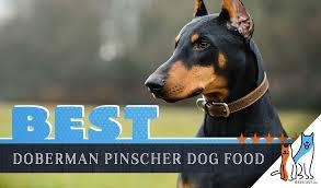 6 Best Doberman Pinscher Dog Foods With Top Puppy Senior