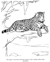 Jaguar Drawing And Coloring Page Ideias Para A Casa Zoo Animal