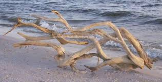 the driftwood gallery is here driftwood wall art and driftwood sculpture