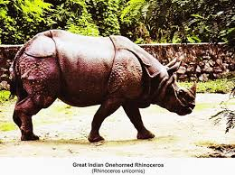 essay on wild animals top essays wildlife geography great n onehorned rhinocerus rhinoceros unicornis