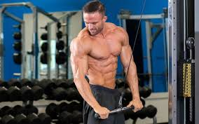 Bodybuilding Exercises Chart Free Download Workout Routines Database 1000 Free Workout Plans
