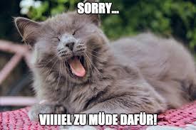 Katzenbilder Lustige Schöne Katzen Bilder Kostenlos