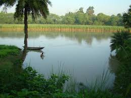 Image result for bangla nature picture
