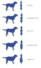 dog breed size chart dog weight tables pet healthcare advice centre
