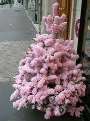 a pink Christmas tree in Paris...my parents brought home a pink Christmas.  Flocked ...