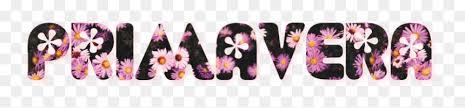 primavera #flor #letras #rosa #spring - African Daisy, HD Png Download - vhv