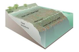 fringing reef diagram of a fringing coral reef
