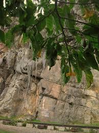 borachero tree in front of the la zona el riel photo by carole lunnysee more