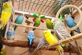 Image result for Quelle cage de chant choisir pour votre canari ?