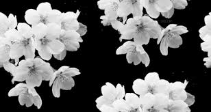 tumblr background black and white flowers. Pictures Black And White Flowers Tumblr Drawing Art Gallery For Background