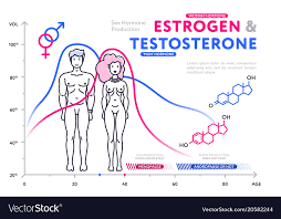 Comparison Of Male And Female Hormones In Chart