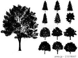 木 シルエット モノクロ 白バックのイラスト素材 Pixta