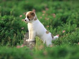 Cute Puppy Wallpapers Wallpaper With ...