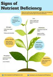Plant Nutrient Deficiency Chart Facebook Lay Chart