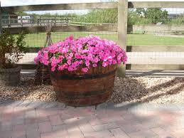 oak barrel planter on farm