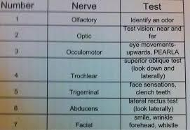 Cranial Nerve Exam Chart Cranial Nerves Cheat Sheet Cranial Nerve Neuro Assessment