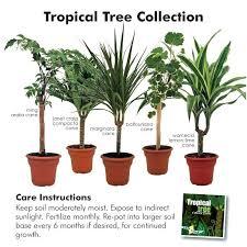 indoor plants with names indoor plants names and pictures in india indoor plants with names