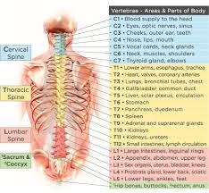 Chiropractic Subluxation Chart End The Confusion Science And Research Prove Chiropractics