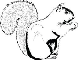 Coloring Pages Squirrel Coloring Page Free E Pages Sheet Download