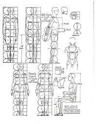 Human Proportions Chart Basic Proportions Stafford Artworks