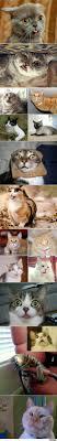 Dumme Katzen Bilder Lustige Bilder Sprüche Witze Echt Lustig
