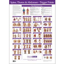 Chiropractic Wall Charts Spine Thorax Abdomen Trigger Point Chart