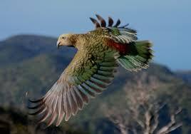 Image result for aves
