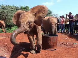 elephant car insurance number best of elephant insurance quote 44billionlater