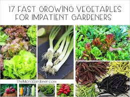 how to grow use nasturtiums the