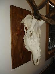 homemade diy elk european skull mount