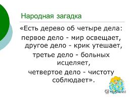 Презентация на тему Наш доктор береза Реферат по биологии  6 Народная