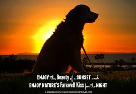 The Beauty Of Sunset Quotes Best of This Moment See Beautiful Sunset Sugar The Golden Retriever