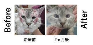 猫 アレルギー 治る