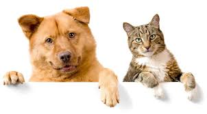 Cat Or Dog Birth Certificates Do They Exist And How To Get One