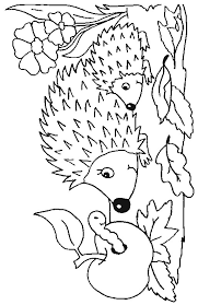 20 Best Hedgehog Coloring Pages For Kids Updated 2018