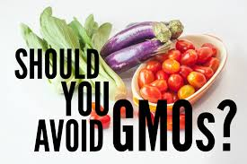 should you avoid gmo s