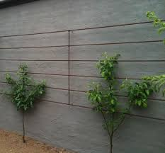 Espalier Apple And Pear Trees In Prince Charlesu0027 Walled Kitchen Growing Cordon Fruit Trees