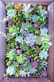live succulent wall art