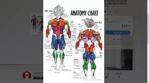 Super Sayan Anatomy Diagram Dragon Ball Know Your Meme