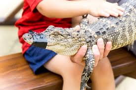 Places to Visit in Daytona Beach with Kids Who Love Animals