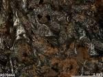 guyanaite
