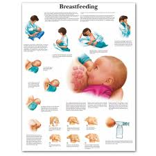 Anatomical Chart Posters Us 13 36 45 Off Wangart Mother Breastfeeding Chart Anatomical Charts Posters Canvas Poster Wall Pictures For Medical Education Office Home Decor In