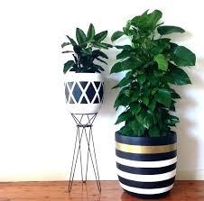 large indoor plants large indoor plant pots indoor plant pots design twins pots modern large indoor