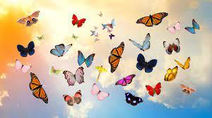 Aesthetic Butterfly Desktop Wallpapers ...