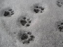 black cat paw and paws image